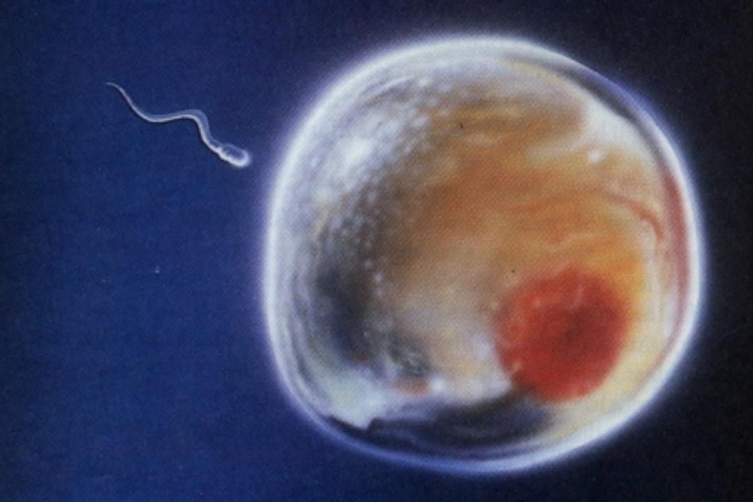 La covid podría afectar a la fertilidad