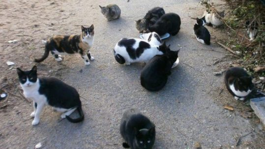 gatos colonia felina
