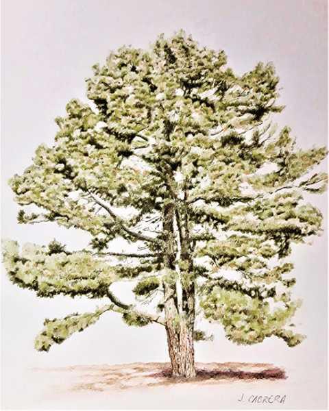 lamina 16 pinos ilustres