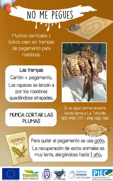 peligro de uso de trampas para roedores para aves